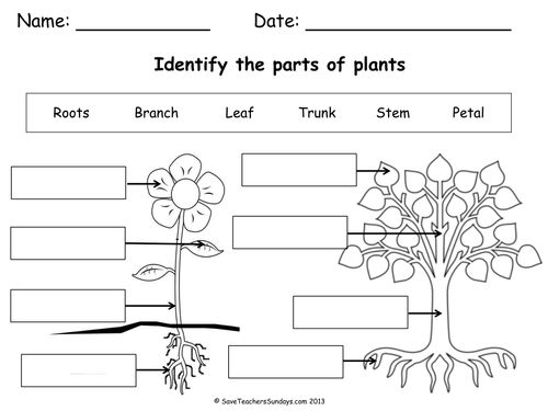 Label Parts Of A Plant And Parts Of A Tree (worksheet) Pdf