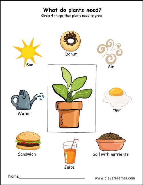Needs Of Plants Worksheets For Preschool  Preschool  Worksheets