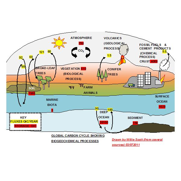 Explaining The Carbon Cycle With Diagrams And A Free Student Worksheet