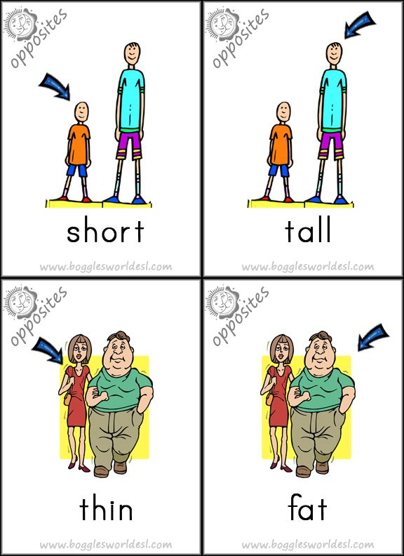 Opposites  Short, Tall, Thin, Fat