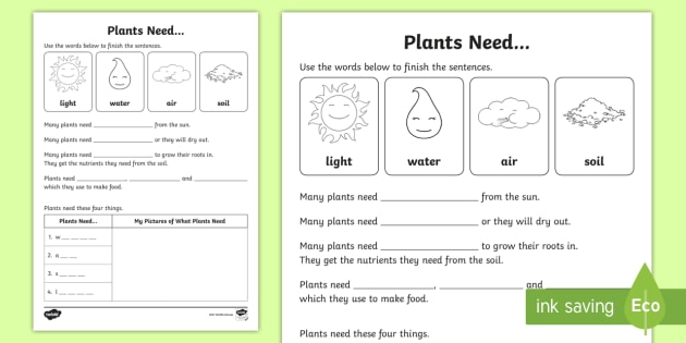 Plants Need Worksheet   Worksheet