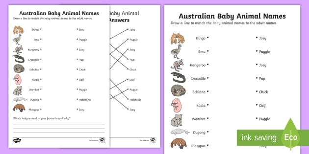 Australian Baby Animal Names Worksheet   Worksheet