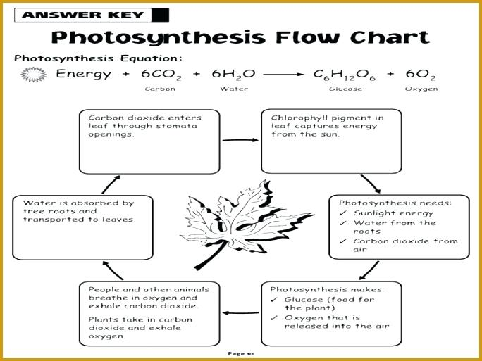 Cellular Respiration And Flow Chart Worksheet Answers