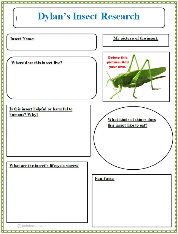 Insect Research Graphic Organizer