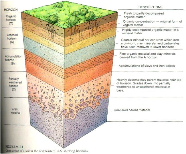 Soil Profile Diagram For School Soil Layers Diagram