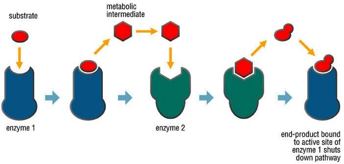 Analyzing Graphics  Enzymes