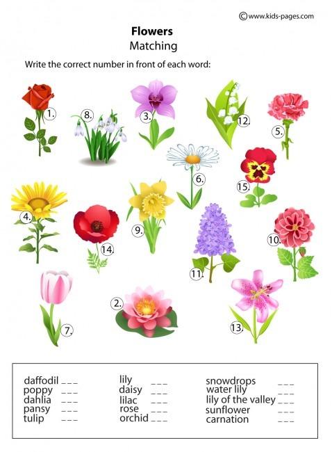 Flowers Matching Worksheet