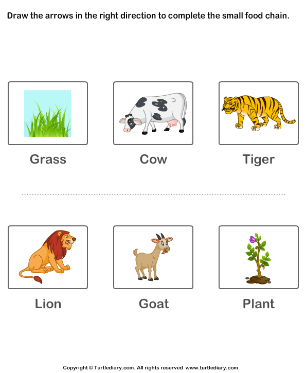Food Chain Printable Worksheet