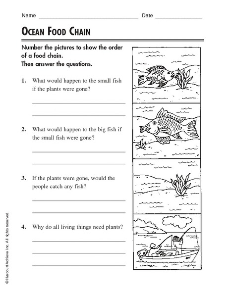 Food Chain Rd Grade Activity Food Chain Worksheet 5th Grade
