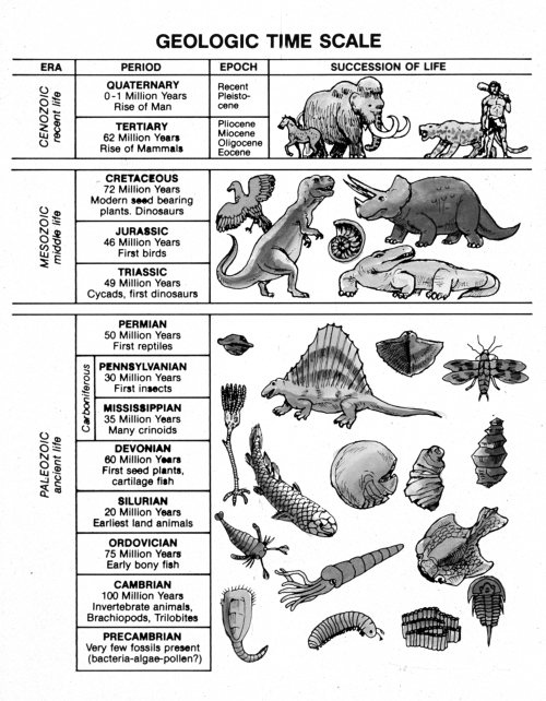 Copy Of Science  Fossils & Geologic Time Scale