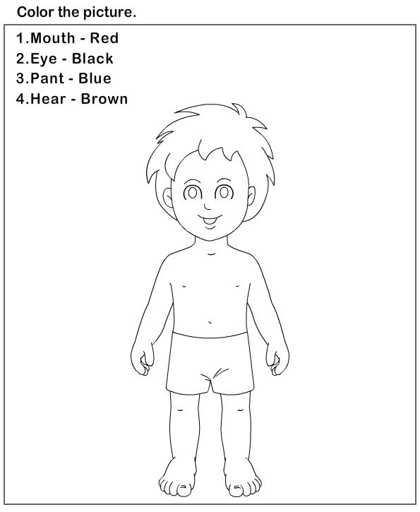 Kindergarten Science Worksheets Body Parts Diagram To Label Lovely