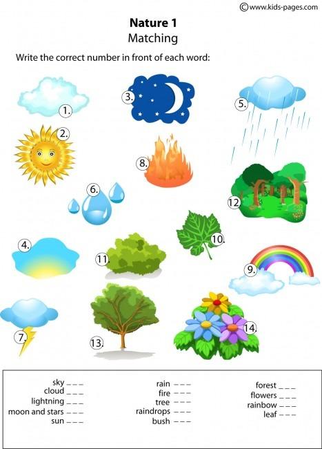 Nature Matching 1 Worksheet