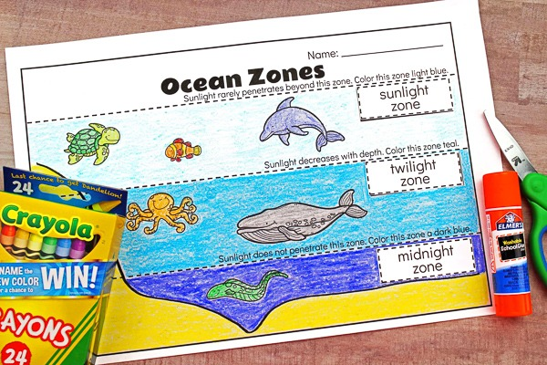 Ocean Zones For Kids  Learning About The Amazing Ocean