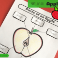 Parts Of An Apple Worksheets