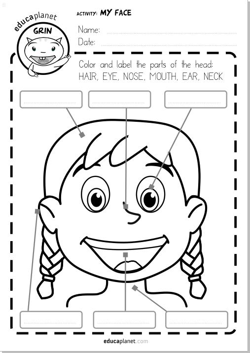 Parts Of The Face Worksheet For Kindergarten Free Worksheets