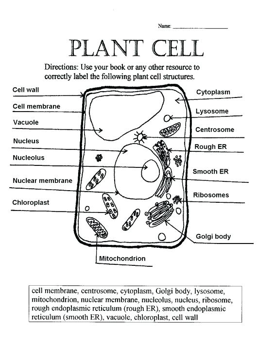 Plant Cell Coloring Diagram Animal Worksheet Biology Page