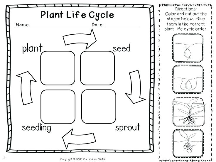 Plant Life Cycle Worksheets 2nd Grade Adapting Plant Life Cycle
