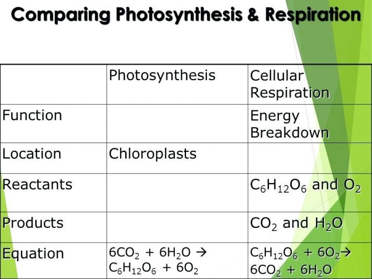 Photosynthesis And Cellular Respiration Comparison Chart Worksheet