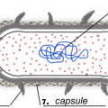 Prokaryotic Cells Worksheets