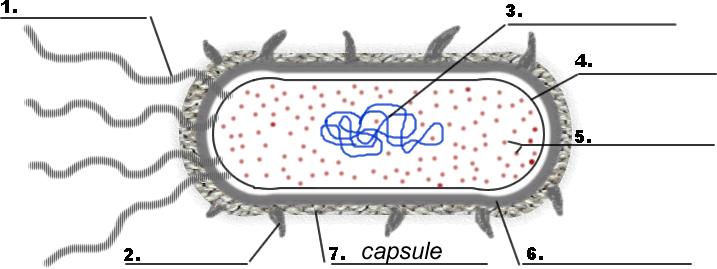 Top Prokaryote Coloring Sheet Answers Ideas