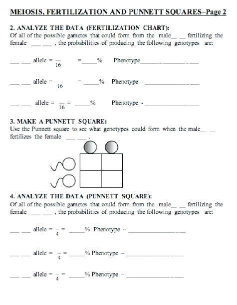 Punnett Square Practice Worksheet Middle School