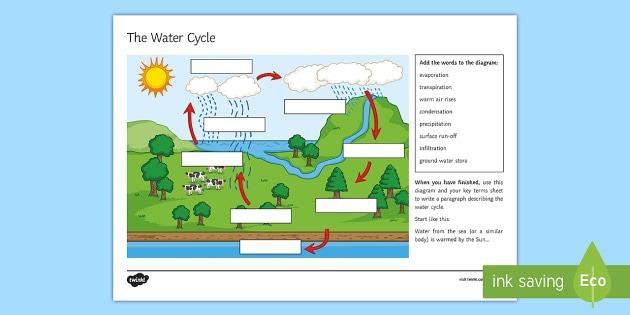 The Water Cycle Worksheet   Worksheet