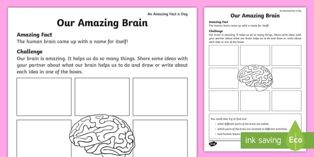 Our Amazing Brain Worksheet   Worksheet