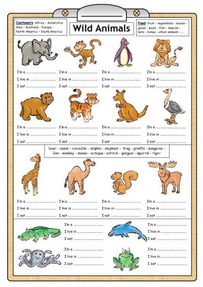 Free Primary Animal Worksheets
