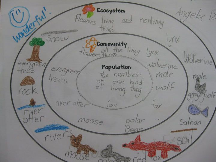Ecosystem, Community, And Population