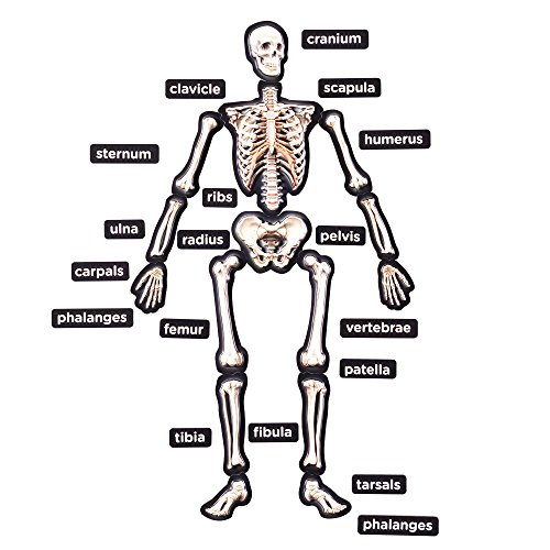 Learning About Bones