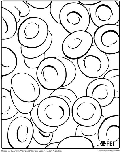 Red Blood Cell Coloring Page