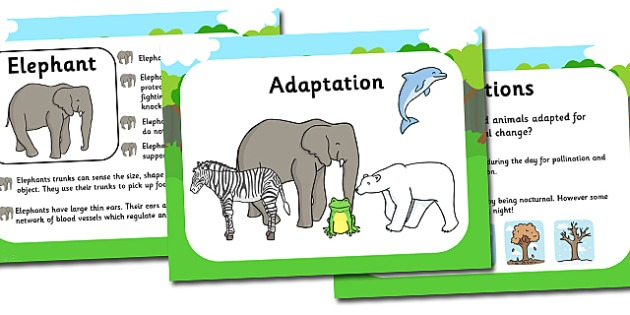 Adaptation Worksheets For Middle School Adaptation Powerpoint And