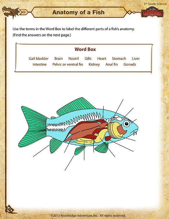 Anatomy Of A Fish View – 5th Grade Science Worksheets Online