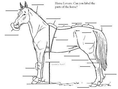 Worksheet For Horseback Pin