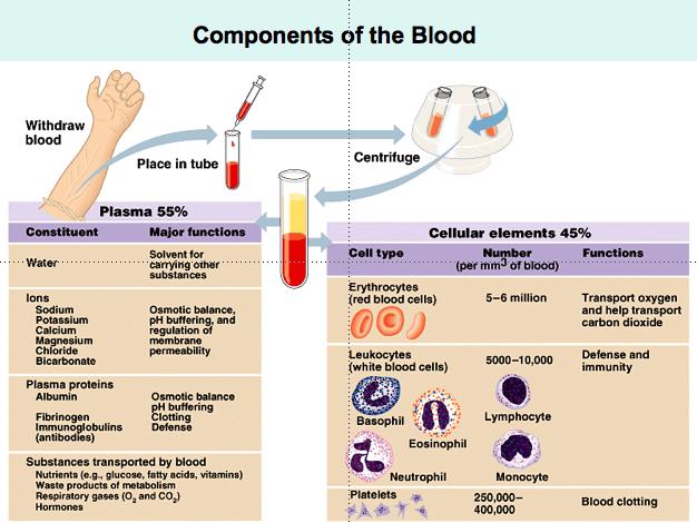 Allen, Bruce   Blood Chapter 10  Bio 2