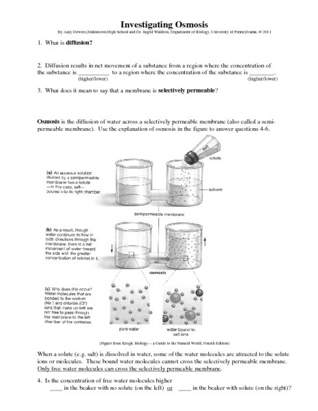 Worksheet Passive Transport Diffusion And Osmosis Answers