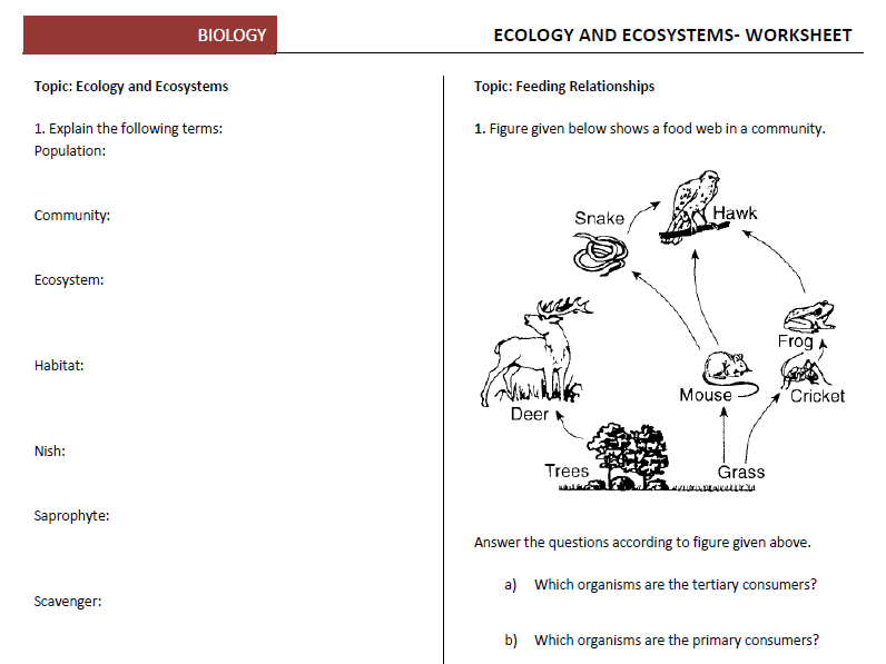 Ecology And Ecosystems Worksheets By Biyonom