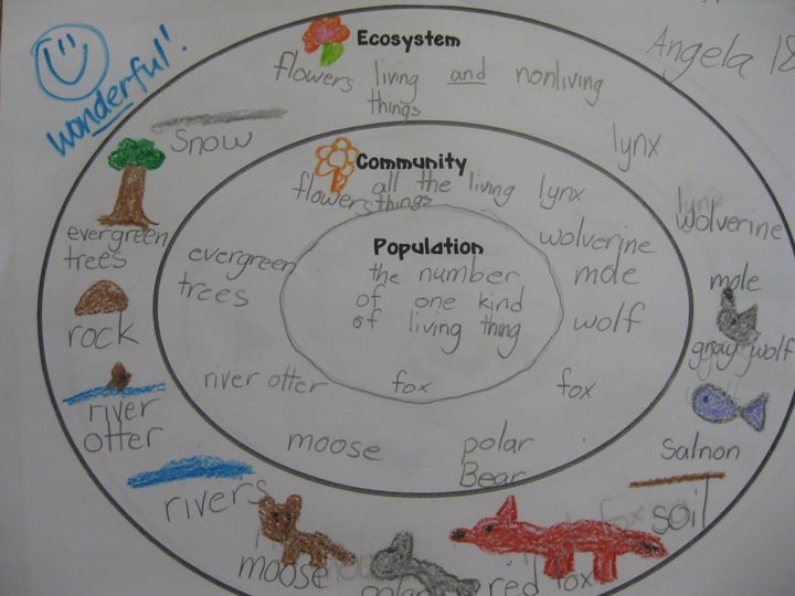 Ecology Worksheets For High School