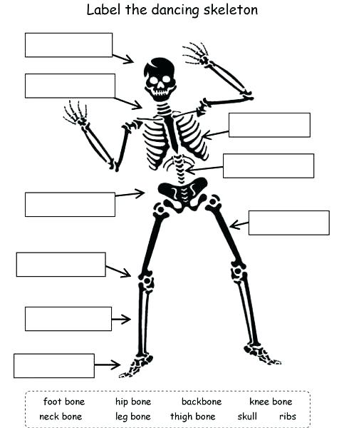 Human Skeleton Worksheets Kindergarten Human Skeleton Worksheets