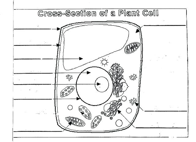 Label Plant Cell Worksheet Plant Cell Diagram Worksheet Unlabeled