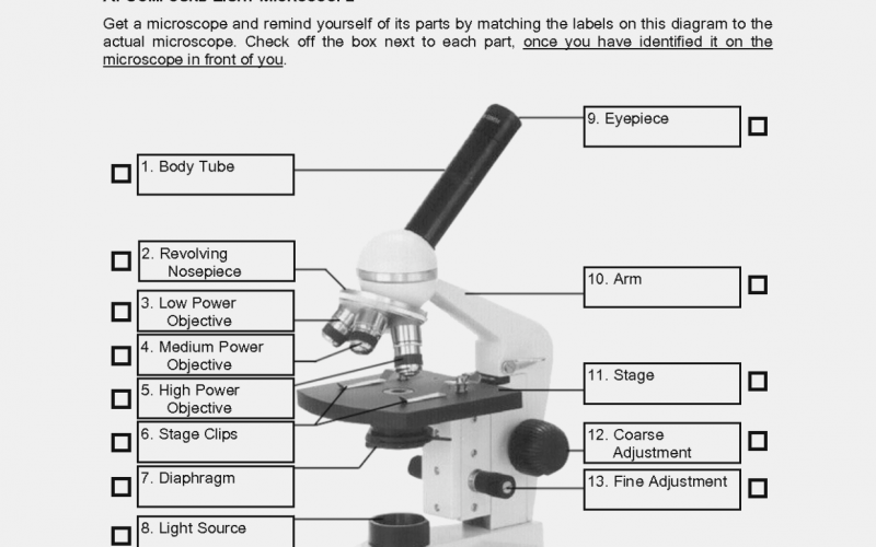 Labeling Parts Of A Microscope Worksheet – Parts Of A Microscope