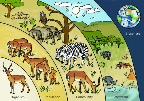 Can You Define Population, Community, Ecosystem, And Biosphere