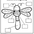 Insect Worksheets For Preschool