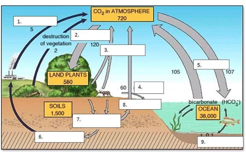 Ecology 8 3