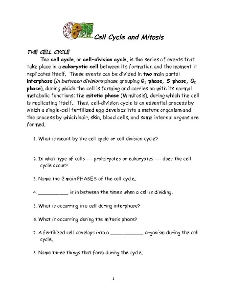 Mitosis And The Cell Cycle Worksheet