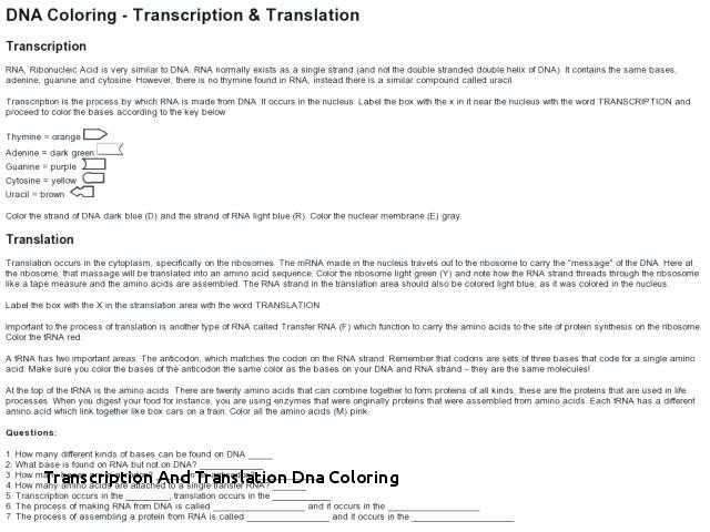 Transcription And Translation Dna Coloring Protein Synthesis In