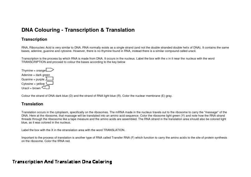 Transcription And Translation Dna Coloring Transcription And