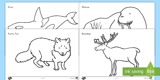 Arctic Animals Coloring Worksheet   Worksheets