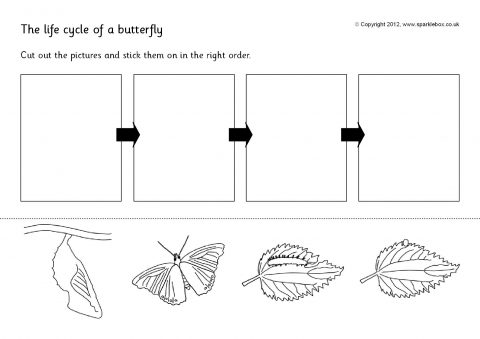 Butterfly Life Cycle Cut And Stick (sb144)