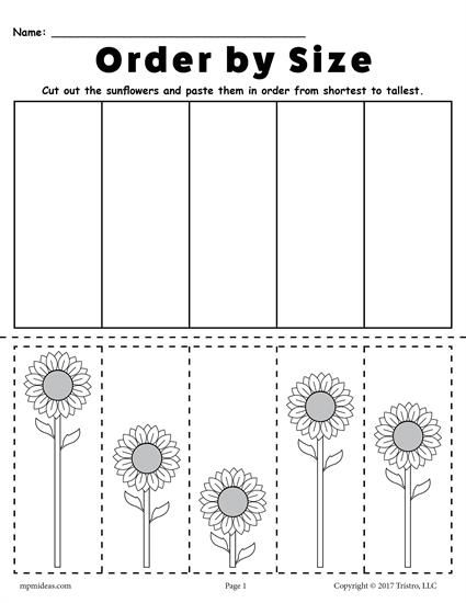 Free Printable Sunflower Ordering Worksheets  Shortest To Tallest
